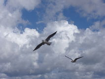 Vogel im Flug 1 Lizenzfreie Stockfotos