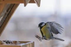 Vogel im Flug Lizenzfreie Stockfotos