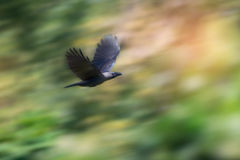 Vogel im Flug stockfotografie