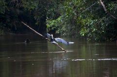 Vogel im Fluss Lizenzfreie Stockbilder