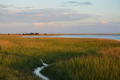 Vogel im Gras stockfoto