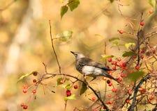 Vogel im Herbstpark Lizenzfreies Stockfoto