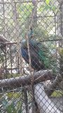 Vogel im Käfig lizenzfreie stockfotos