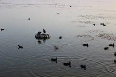 Vogel im Meer Stockfotografie