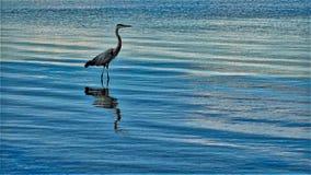 Vogel im Meer im Meer stockfoto