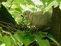 Vogel im Nest Lizenzfreie Stockbilder