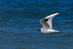 Vogel im reinen Himmel Lizenzfreie Stockfotografie