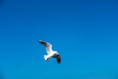 Vogel im reinen Himmel Lizenzfreies Stockbild