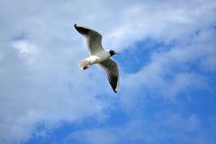 Vogel im reinen Himmel Lizenzfreie Stockbilder