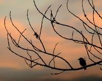 Vogel im Schattenbild Lizenzfreies Stockbild