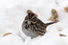 Vogel im Schnee Stockbild