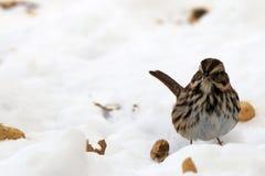 Vogel im Schnee Stockbilder