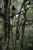 Vogel im Schwarzen und im Gelb Stockbilder