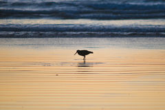 Vogel im Sonnenuntergang lizenzfreies stockbild