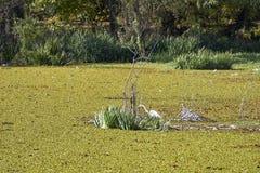 Vogel im swampland Lizenzfreie Stockfotos