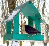 Vogel im Vogelhaus Stockfotografie