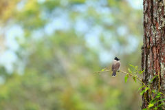 Vogel im Wald Stockfotos