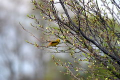 Vogel im Wald Lizenzfreies Stockbild