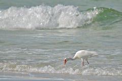 Vogel im Wasser Stockbild