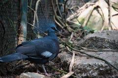 Vogel im Zoo Stockbild