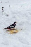 Vogel isst Brot Stockbild