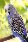 Vogel ist auf einem grünen Hintergrund Lizenzfreie Stockbilder