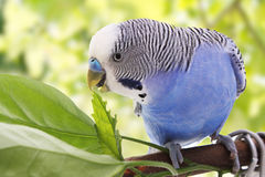 Vogel ist auf einem grünen Hintergrund Lizenzfreies Stockfoto