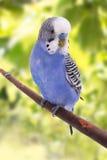 Vogel ist auf einem grünen Hintergrund Lizenzfreie Stockfotos