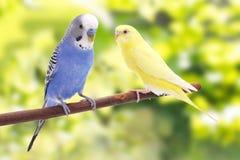Vogel ist auf einem grünen Hintergrund Stockfotografie