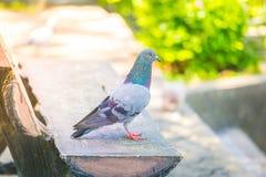Vogel ist Entspannung auf einem Stuhl, tauchte stockfotografie
