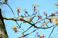 Vogel klaar te vliegen Stock Foto
