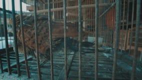 Vogel in kooi stock video