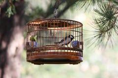 Vogel in kooi Stock Foto