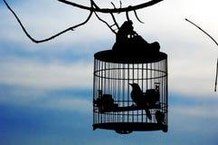 Vogel in kooi Stock Afbeeldingen