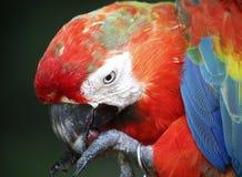 Vogel in Kuala Lumpur Bird Park, Maleisië Stock Foto's