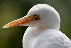 Vogel in Kuala Lumpur Bird Park, Maleisië Royalty-vrije Stock Afbeelding