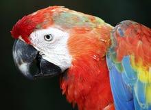 Vogel in Kuala Lumpur Bird Park, Maleisië Royalty-vrije Stock Foto