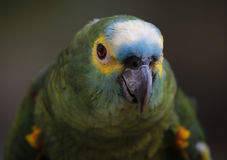 Vogel in Kuala Lumpur Bird Park, Maleisië Stock Afbeeldingen