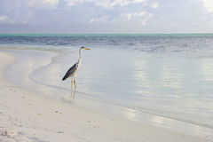 Vogel in Lagune stock afbeeldingen