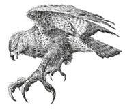 Vogel-leistungsfähiger Auszug. Lizenzfreie Stockfotografie