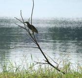 Vogel levend op zijmeer Stock Afbeelding