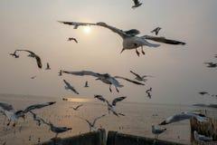 Vogel in Meer lizenzfreie stockfotos