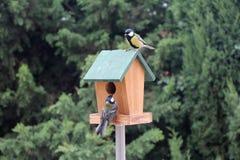 Vogel-Meisefütterung Lizenzfreies Stockbild