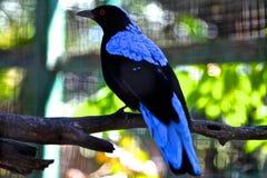 Vogel met blauwe veren die op een boomtak zitten Royalty-vrije Stock Afbeelding