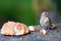 Vogel met een broodje Stock Foto's
