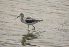Vogel met een lange snavel in het water Royalty-vrije Stock Fotografie