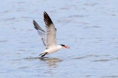 Vogel met een vis Royalty-vrije Stock Foto's