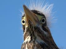 Vogel met fouten royalty-vrije stock afbeeldingen
