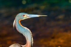 Vogel met lange bek of rekening Stock Foto