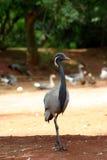 Vogel met lange benen in openlucht Royalty-vrije Stock Afbeelding